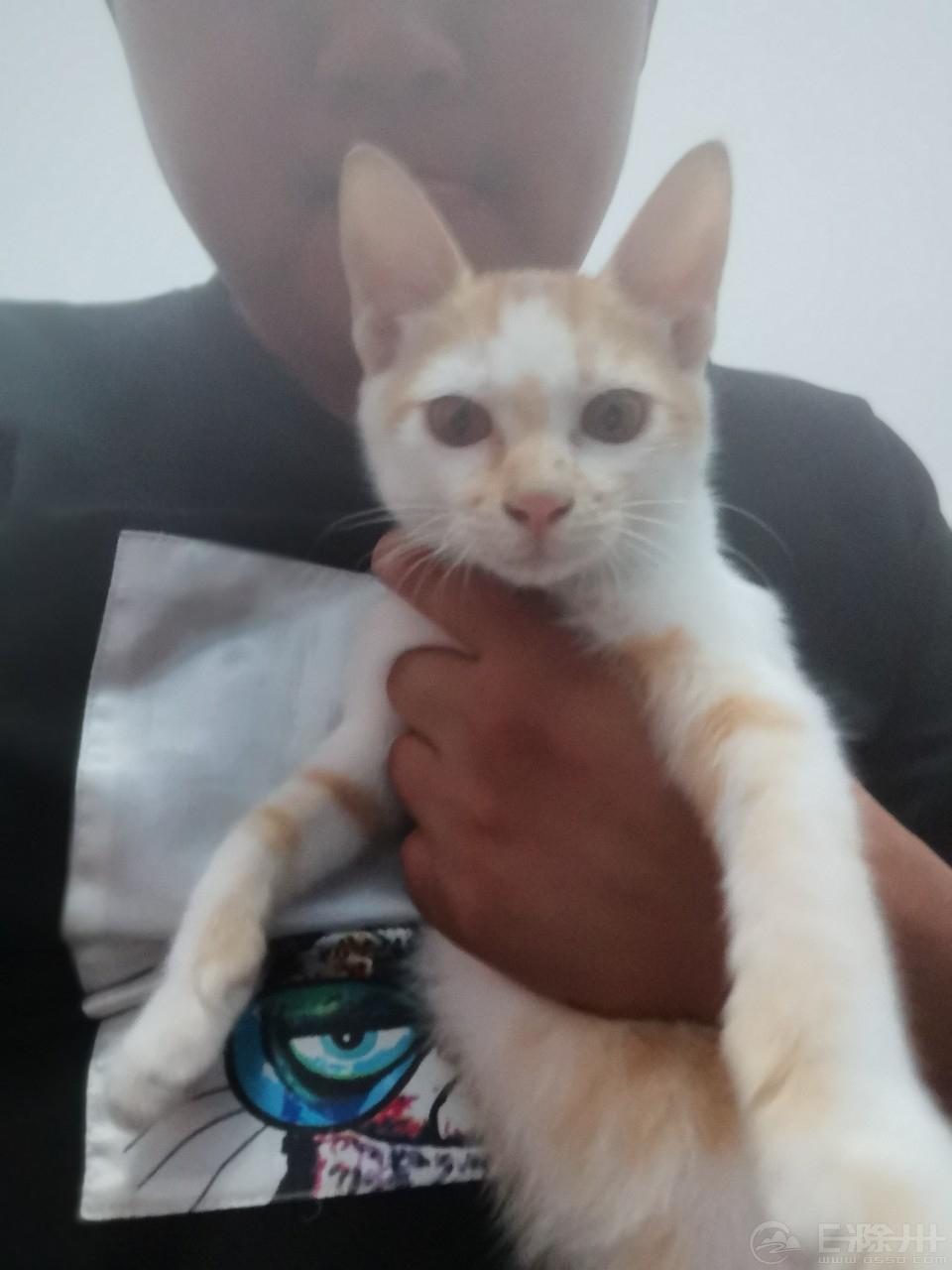 二个多月的小橘猫找领养粘人可爱乖乖 有喜欢的朋友加